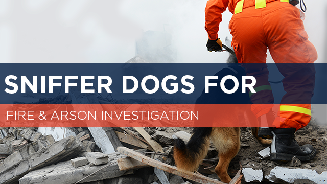 Sniffer Dogs for Fire & Arson Investigation